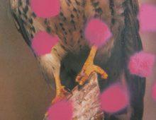 Roofvogel met roze stippen